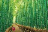 【取寄商品】★32%off★1000ピースジグソーパズル:嵯峨野の竹林