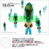 ★35%off★プリズムアート108ピースジグソーパズル:軟体動物(ヒメイカ)