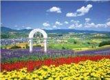 【引上品】◆希少品◆2014スモールピースジグソーパズル:富良野 -花咲く丘-《廃番商品》