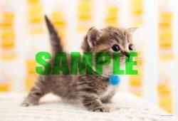 画像1: ◆希少品◆108ラージピースジグソーパズル:シンプルスタイル どこ行くの?《廃番商品》