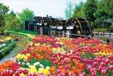 ★31%off★108ラージピースジグソーパズル:チューリップ -花薫る-(富山)