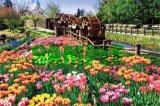 ◆希少品◆1000ピースジグソーパズル:シンプルスタイル チューリップと五連水車《廃番商品》