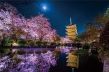 ★27%off★1000ピースジグソーパズル:月夜に咲く(京都)(KAGAYA)
