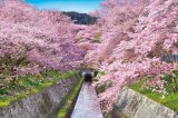 ★32%off★1000ピースジグソーパズル:桜咲く琵琶湖疎水-滋賀