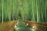 ■2016ベリースモールピースジグソーパズル:明かり灯る竹林-嵯峨野