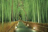 ★32%off★2016ベリースモールピースジグソーパズル:明かり灯る竹林-嵯峨野