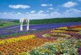 ■300ピースジグソーパズル:花の咲く丘-富良野