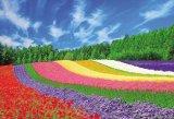 ★32%off★1000ピースジグソーパズル:富良野の花咲く丘