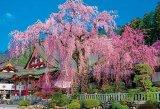 ★26%off★1000ピースジグソーパズル:枝垂れ桜咲く久遠寺