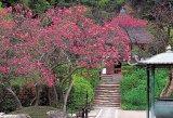 ◆希少品◆1000ピースジグソーパズル:木蓮咲く明月院(鎌倉)《廃番商品》