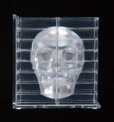 3Dインサイト スカル《廃番商品》