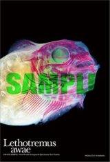 ■プチパズル99ピース:透明標本 ダンゴウオ《カタログ落ち商品》