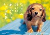 ◆希少品◆300マイクロピースジグソーパズル:たくさん咲いた《廃番商品》