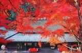 ■1000ピースジグソーパズル:嵯峨野茶屋の秋-京都《廃番商品》