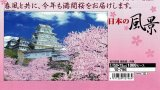 【取寄商品】★32%off★1000ピースジグソーパズル:桜花爛漫 姫路城-兵庫