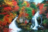 ◆希少品◆2016ベリースモールピースジグソーパズル:秋に染まる竜頭の滝-栃木《廃番商品》