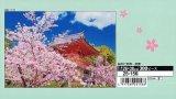 ★32%off★300ピースジグソーパズル:桜の仁和寺-京都