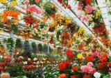 ■216スモールピースジグソーパズル:ブルームガーデン-静岡《廃番商品》