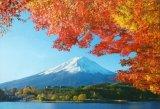 ■300ピースジグソーパズル:富士秋景-山梨
