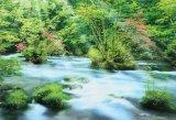 ◆希少品◆300ピースジグソーパズル:ツツジ咲く奥入瀬渓流-青森《廃番商品》