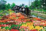 ◆希少品◆1053スーパースモールピースジグソーパズル:五連水車と花咲く公園-富山《廃番商品》