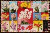 ■2542スーパースモールピースジグソーパズル:蘭コレクション《廃番商品》