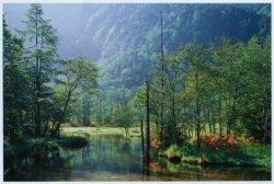 画像1: ■1000ピースジグソーパズル:新緑の田代池・上高地(長野)《廃番商品》