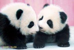 画像1: 【取寄商品】★32%off★150ラージピースジグソーパズル:ハロー!パンダ