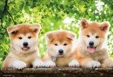 ★32%off★300ピースジグソーパズル:わんぱく秋田犬